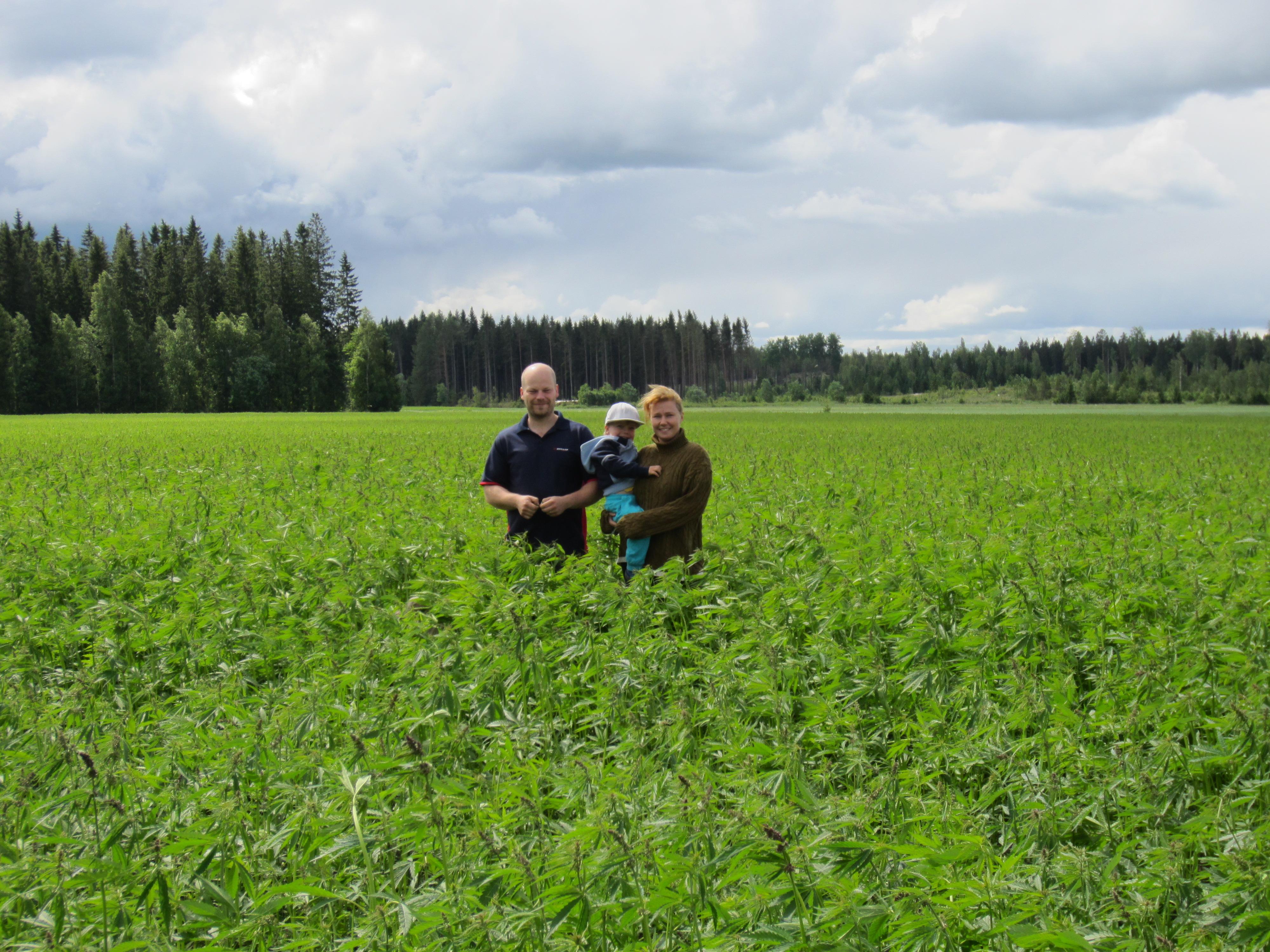 Ville, Elias ja Virve viljelevät Murtolan tilalla hampun lisäksi mm. ruista, ohraa ja rapsia, sekä tuottavat hunajaa.