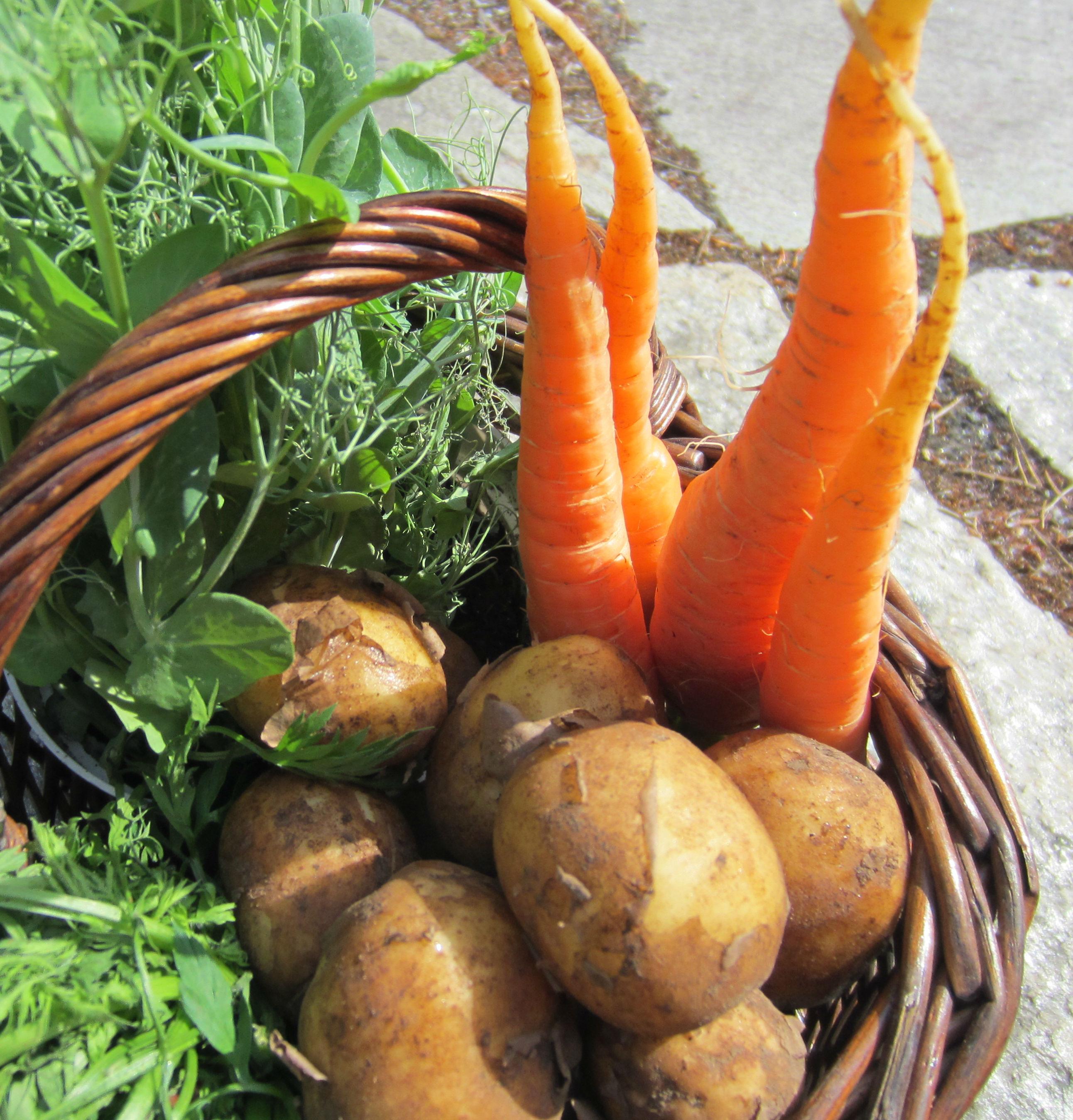 Kesällä pääroolin voi hyvin antaa uusille perunoille. Kuva: Terhi Pohjanheimo