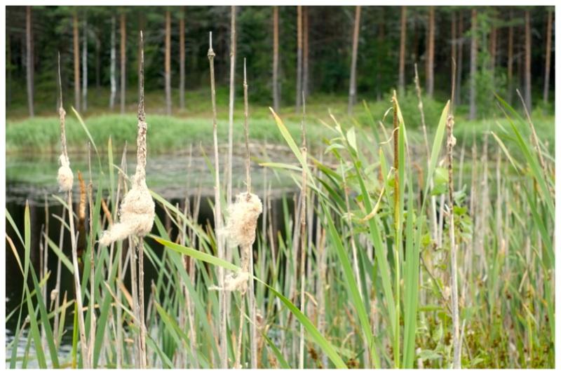 Kosken kartanon vanhin kosteikko on perustettu jo 10 vuotta sitten. Eri-ikäiset kosteikot muodostavat verkoston, jossa monet lajit pystyvät hyödyntämään erilaisia luonnonympäristöjä.