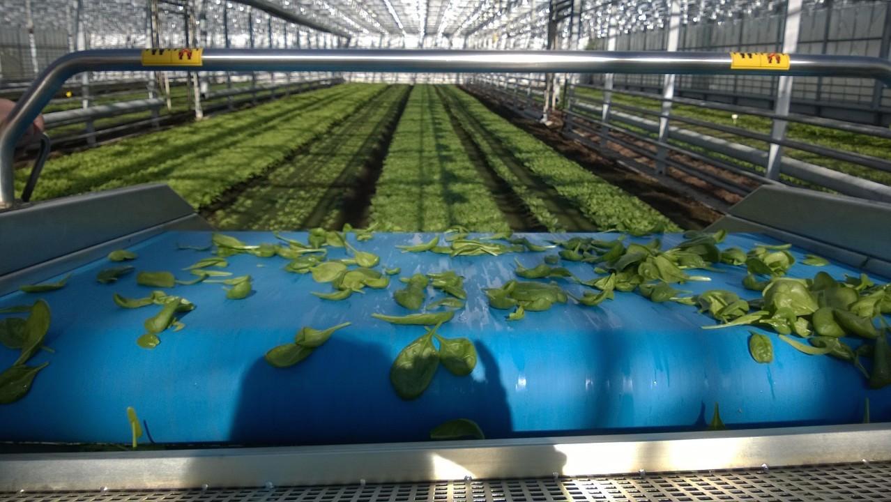 Piltin puutarhalla viljelyssä ei käytetä lainkaan kemiallisia torjunta-aineita, vaan kaikki torjunta hoidetaan biologisesti.