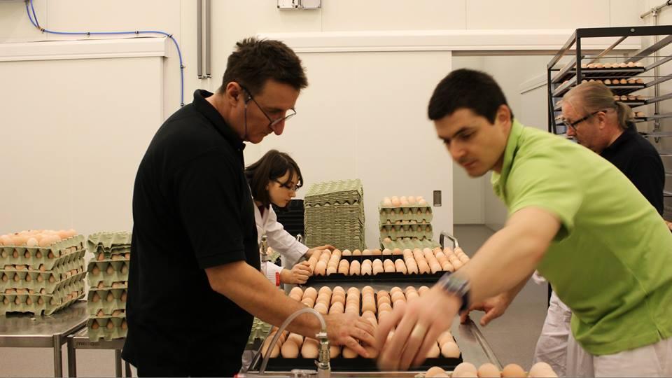 Hautomossa kaikki munat käydään läpi käsin, jottei joukkoon pääsisi viallisia yksilöitä. Kuva: Huttulan Kukko