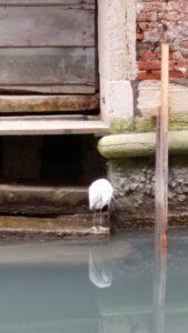 Veden pinnan vaihtelu jättää jälkensä rakennuksiin. Kuva: Kaisa Leiwo